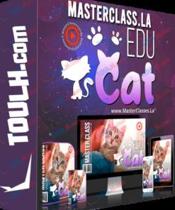 Curso para educar a Gatos